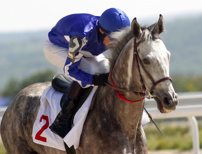 A gray racehorse and jockey in purple and white silks cross the finish line first in a horse race.